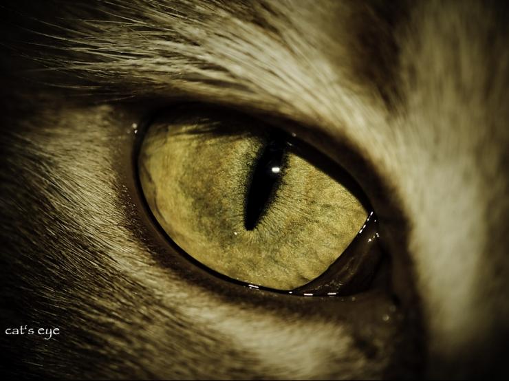 Miért lát a macska sötétben is?